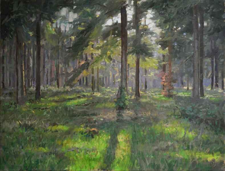 06 Tegenlicht met naaldbomen